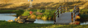 South of Calgary - Outdoor Country Wedding Pond and Bridge